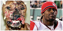 Michael Vick and a badly bruised dog